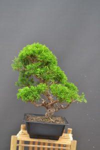 Nové bonsaje pridané do obchodu.